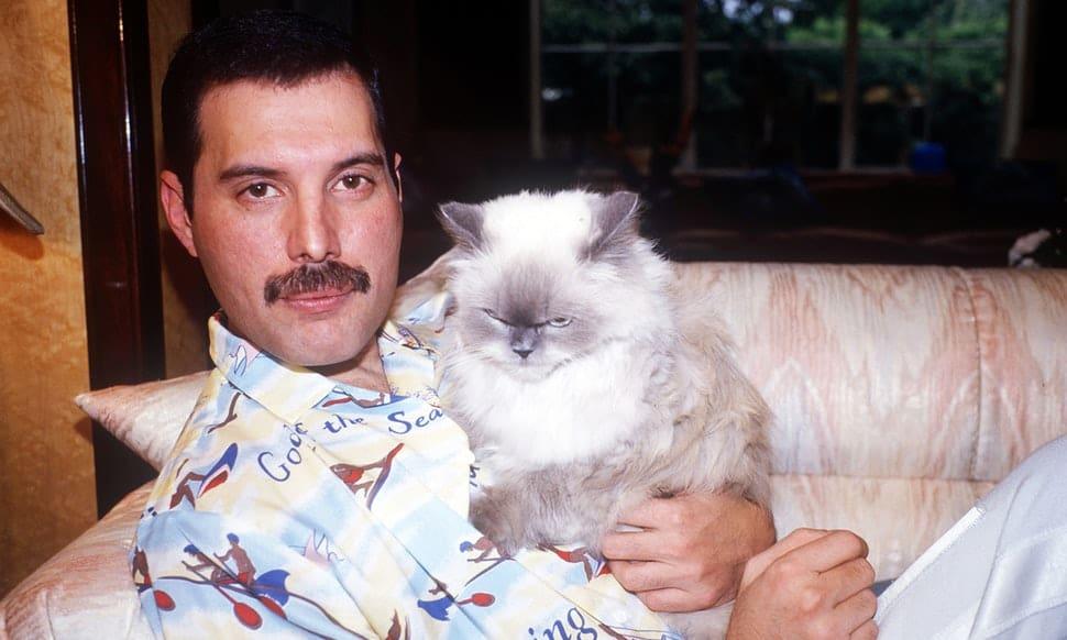 famosos que amaron a los gatos
